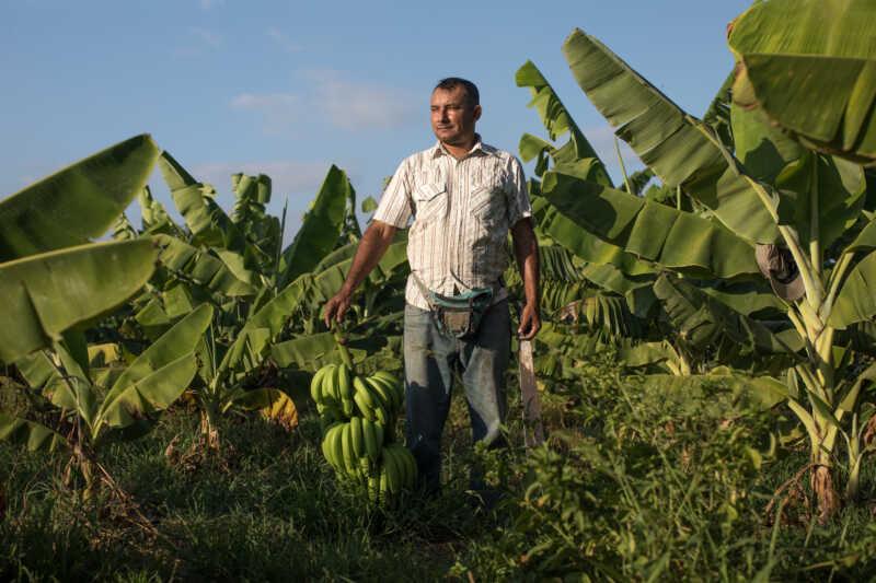 Neue Dokumentation begleitet Fairtrade-Produzenten in der Pandemie
